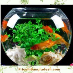 Goldfish Easy To Maintain