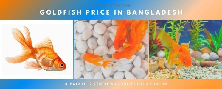 Goldfish Price In Bangladesh