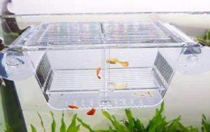 Breeder Aquarium